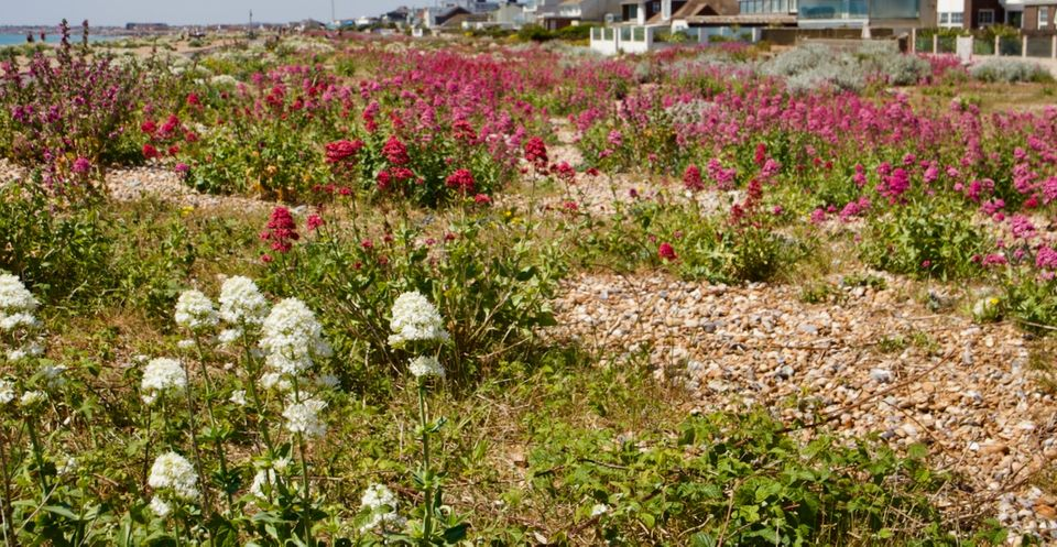 Shoreham Reading Digest: 2nd June